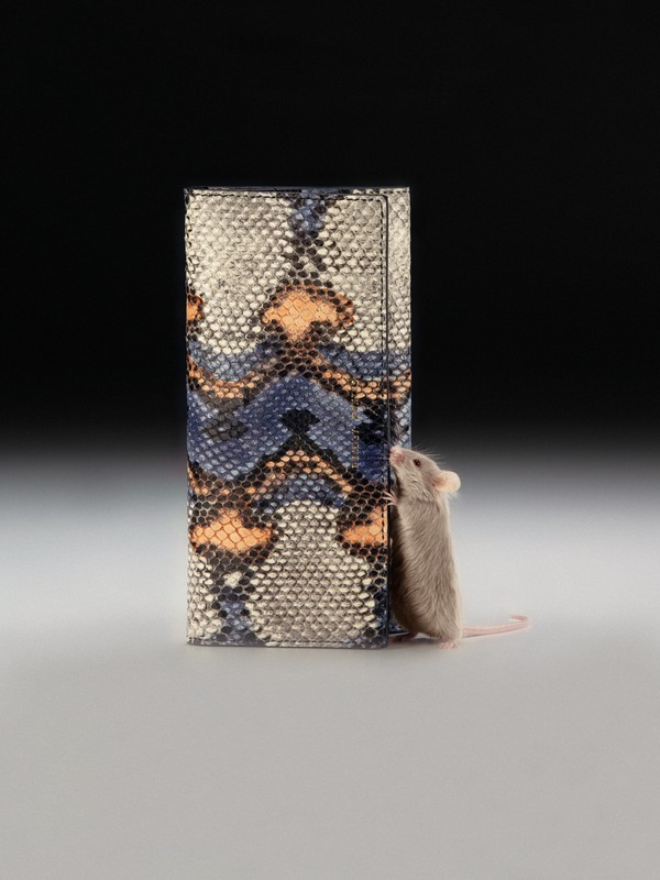 Austin inspecting Lady Wallet Python in Coral